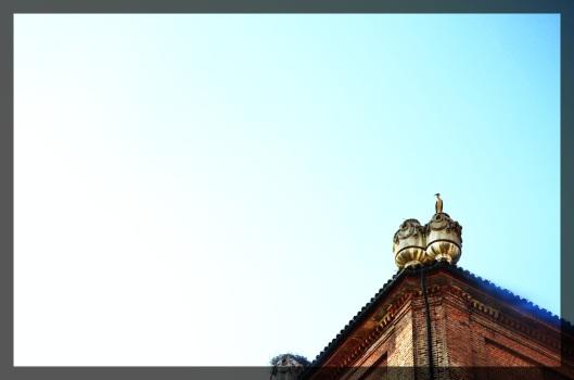 DSC_0040_Fotor